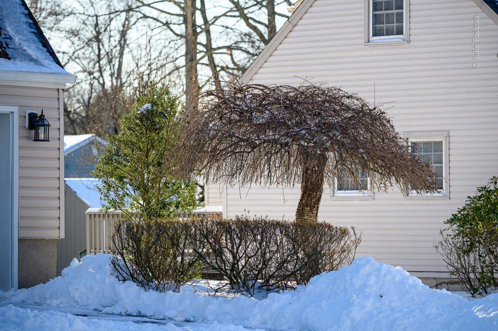 Snowy landscape - Landscape photography by the professional photographer servicing New York City and North Jersey (Bergen County, New Jersey) - Julie Pavlova